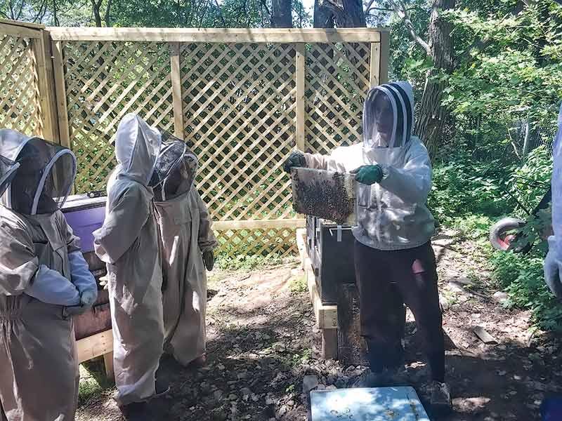 Tending-the-Hive2_800x600